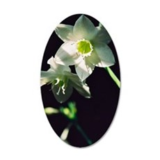 Amazon Lily 35x21 Oval Wall Decal
