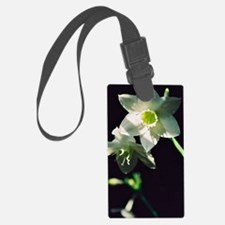 Amazon Lily Luggage Tag