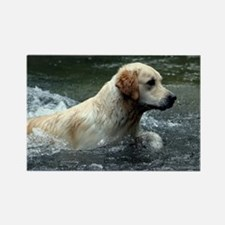 Labradoodle greeting Rectangle Magnet