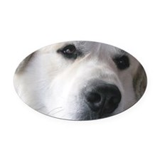 Great pyr Oval Car Magnet