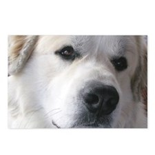 Great pyr Postcards (Package of 8)