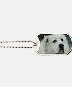 Great pyr Dog Tags