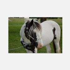 "Gypsy Vanner stallion ""Axel"" Magnets"