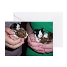 Baby guinea pigs Greeting Card