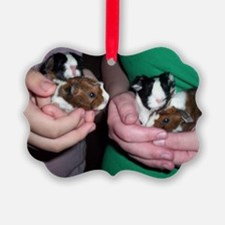 Baby guinea pigs Ornament