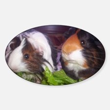 Guinea pigs, Watson and Sophie Decal