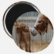 Newborn Donkey Foal Magnet