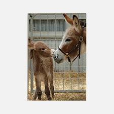 Newborn Donkey Foal Rectangle Magnet