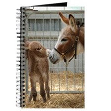 Newborn Donkey Foal Journal