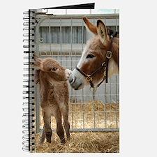 Newborn Donkey Foal Journal