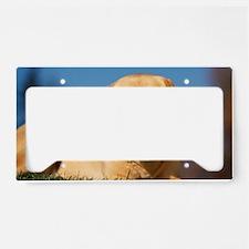 LabTB panel License Plate Holder