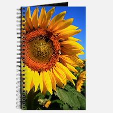 Sunny Journal