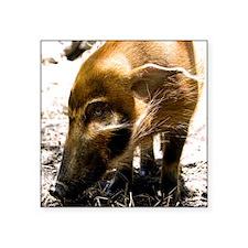"(14) Pig Profile  1966 Square Sticker 3"" x 3"""