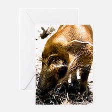 (14) Pig Profile  1966 Greeting Card
