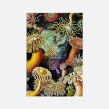 Actiniae by Ernst Haeckel Rectangle Magnet