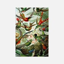Hummingbirds (Trochilidae) by Ern Rectangle Magnet