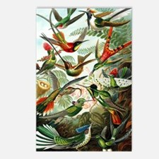Hummingbirds (Trochilidae Postcards (Package of 8)