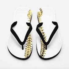 AP-Lat Spine Flip Flops