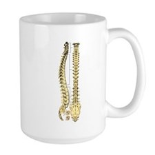 AP-Lat Spine Mugs