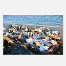 Walrus Snuggle Postcards (Package of 8)
