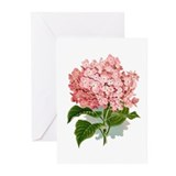 Hydrangea Greeting Cards (20 Pack)