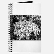 GBF Honeysuckle Journal