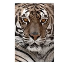 x14 pale tiger Postcards (Package of 8)