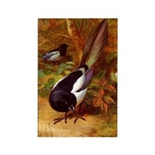 Magpies, Magpie Birds naturalism  Rectangle Magnet