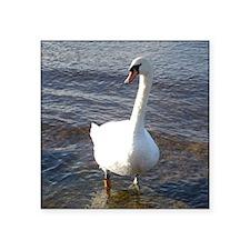 "Beautiful Swan Square Sticker 3"" x 3"""
