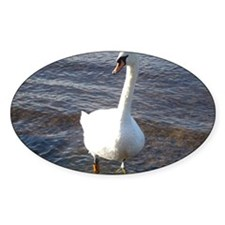 Beautiful Swan Decal