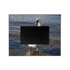 Beautiful Swan Picture Frame