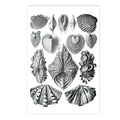 Shell Fossils Postcards (Package of 8)