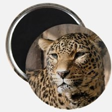Leopard001 Magnet
