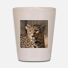 Leopard001 Shot Glass