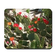 colorful cactus flowers Mousepad
