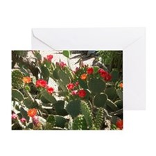 colorful cactus flowers Greeting Card