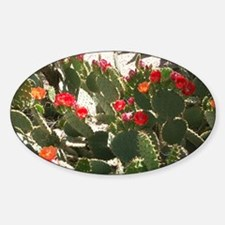 colorful cactus flowers Decal
