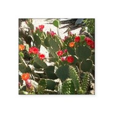 "colorful cactus flowers Square Sticker 3"" x 3"""