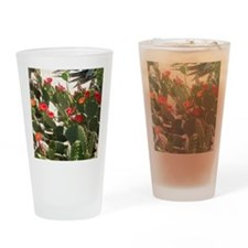 colorful cactus flowers Drinking Glass