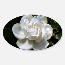 gardenia 35x23 Sticker (Oval)