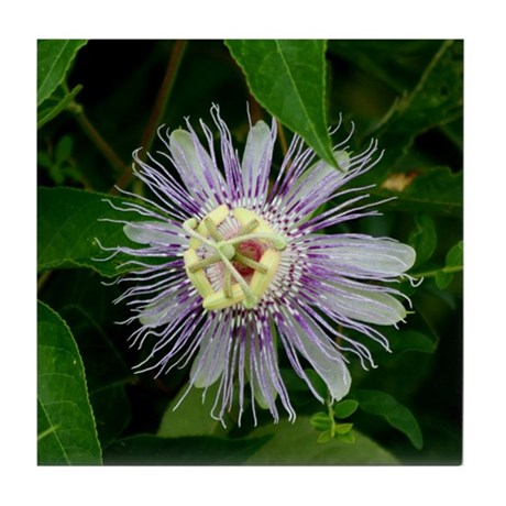 Passionflower Tile Coaster