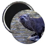 River Otter Magnets