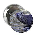 River Otter 2.25