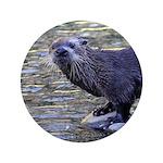 River Otter 3.5