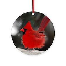 3-Windblown Cardinal 01 06 09 DSC_0 Round Ornament