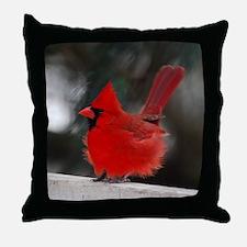 3-Windblown Cardinal 01 06 09 DSC_031 Throw Pillow