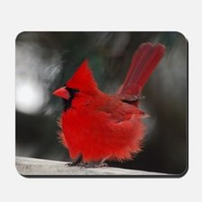 3-Windblown Cardinal 01 06 09 DSC_0311 2 Mousepad