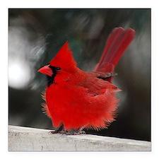 "3-Windblown Cardinal 01  Square Car Magnet 3"" x 3"""