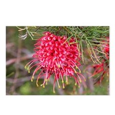 Red grevillea flower  Postcards (Package of 8)
