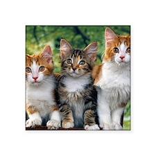 """Tthree_kittens Square Sticker 3"""" x 3"""""""
